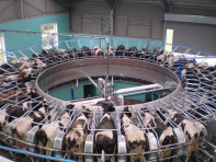 The 40-point GEA AutoRotor milking parlour installed at Shotlinn Farm